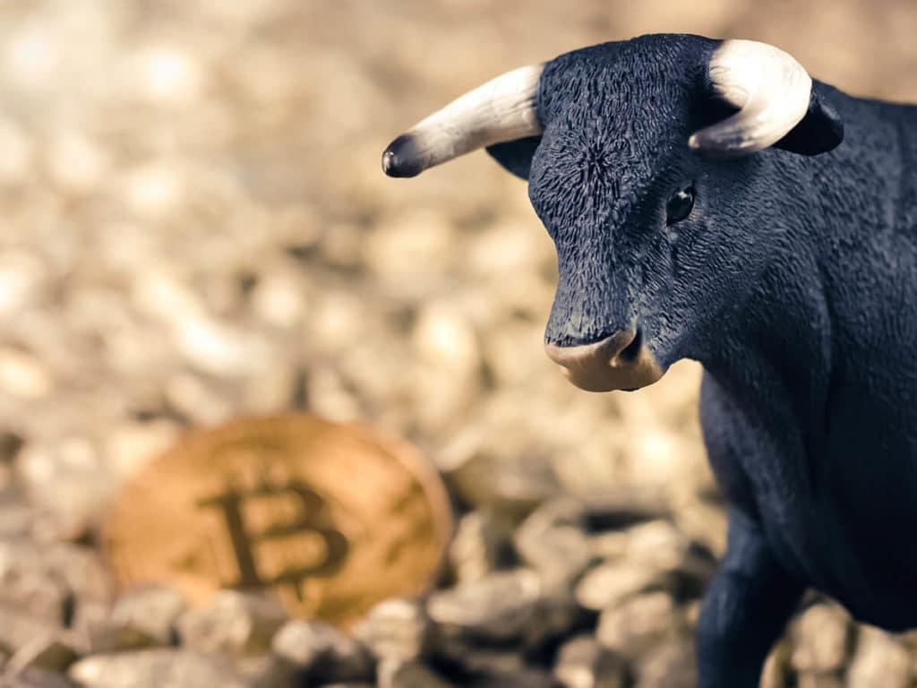 will bitcoin value go up bull run